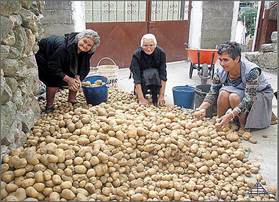 O concelho do Sabugal foi importante produtor de batata