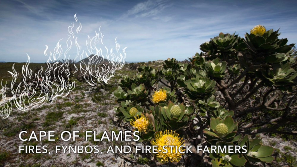 Cape_Point_E12 Cape of Flames - Fires, Fynbos, and Fire-Stick Farmers