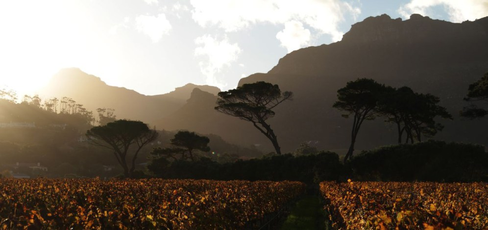 A walk around the grounds at Groot Constantia will provide some unusual views and dramatic landscapes many others might miss