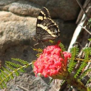 Cape Town Big 6 Fauna and Flora