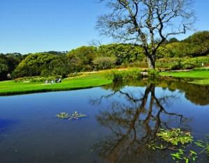 AUG now: Kirstenbosch pond
