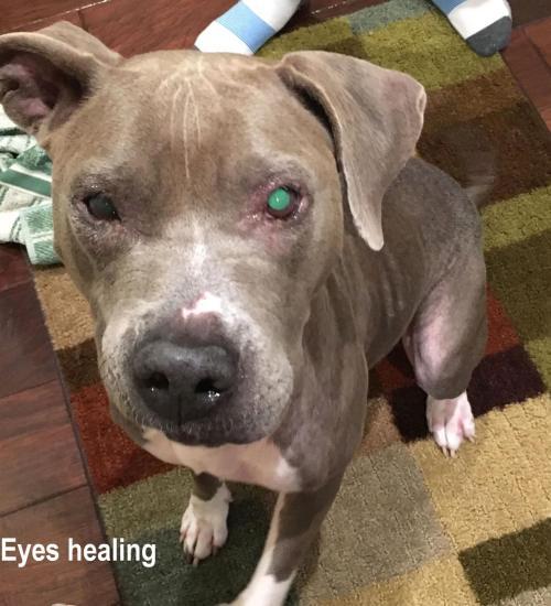 Medium Of Dog Eye Infection