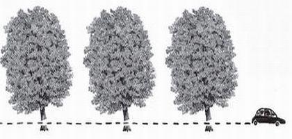 voiture_arbres