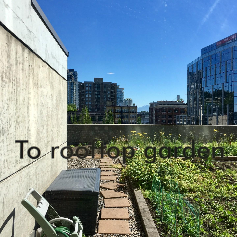 Growing a green thumb: beets
