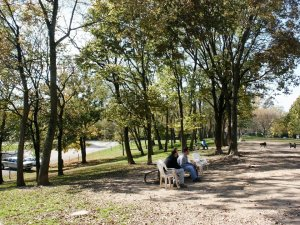 The Mount Airy Dog Park