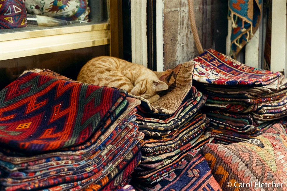 Cat on kilims in the Grand Bazaar, Istanbul