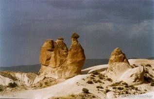 The Camel - Cappadocia
