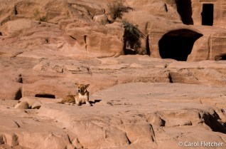 Dog in Petra