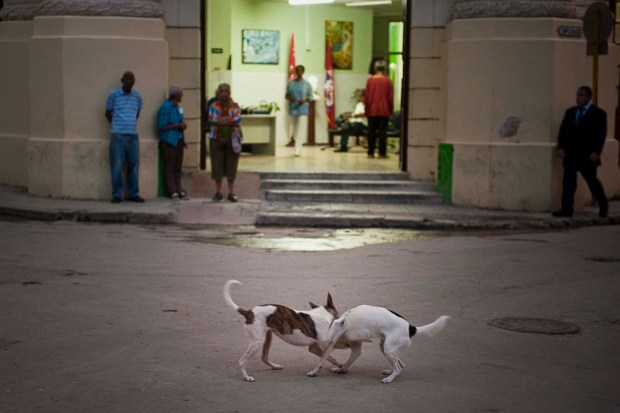 Dogs at dawn. Workers and waiting at dawn. Havana Cuba.