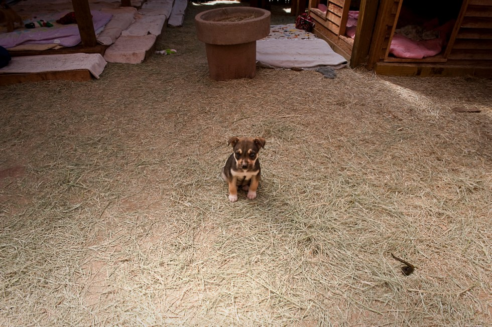 puppy dog in hay