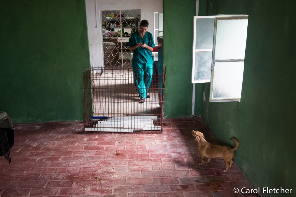 Cuba Aniplant Veterinarian, Edgar Llorente Llano, checks his messages