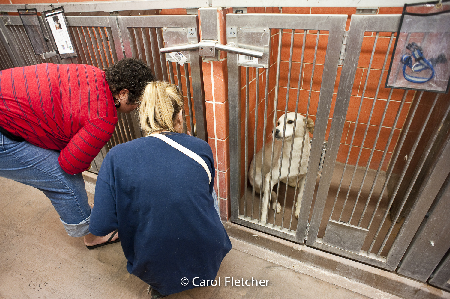 dog shelter choices rescuer ignored dog