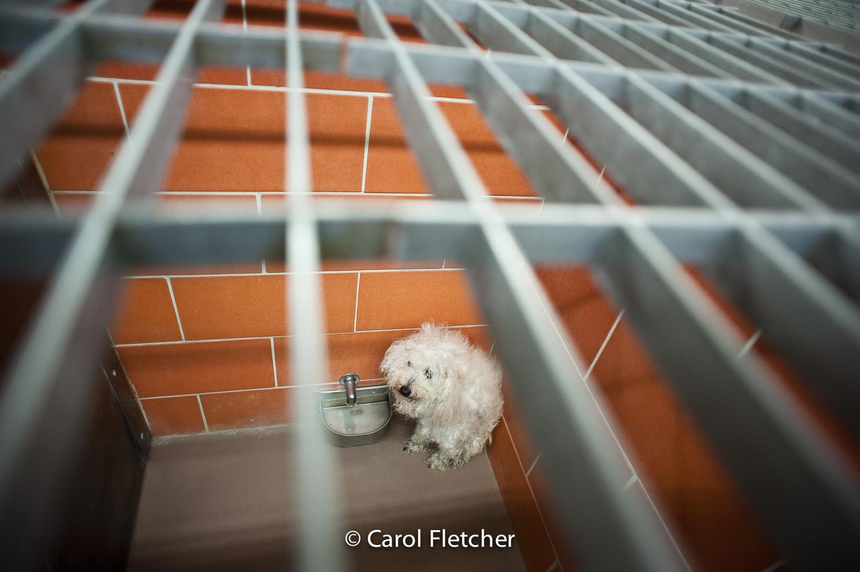 dog shelter scared corner cage rescuer