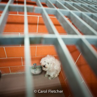 dog shelter scared corner cage rescuer