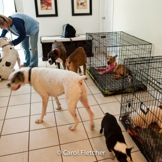 dogs crates cages rescuer