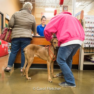 shopping dog leash store rescuers