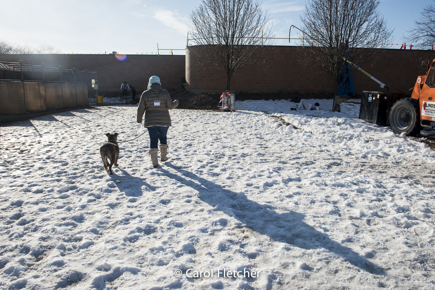 snow dog rescuer shelter construction