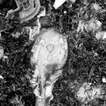 lost soles (7)