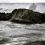 seafan2