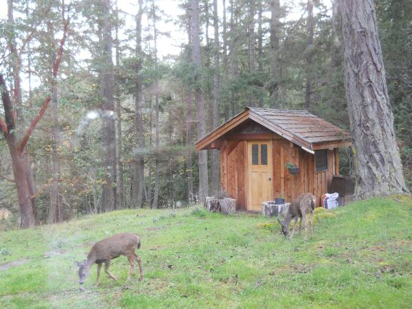 Deer by Writer's Shack