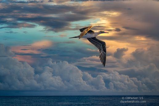Sunrise Flight - At Sea, Solomon Islands 2012