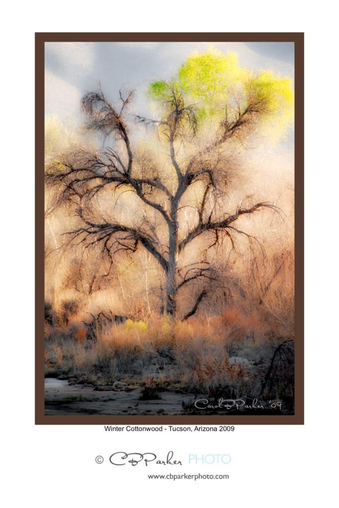 winter-cottonwood