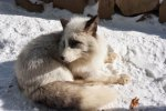 zao-fox-village-japan-41