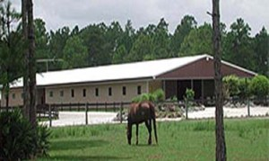 Steel Buildings Riding Arena with horse grazing in the fore ground