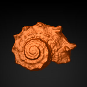 Shell_13x1_front