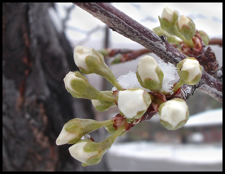 plumflowersblog