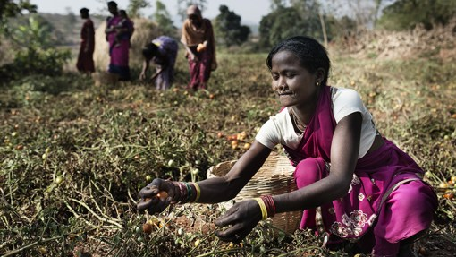 Les femmes, des atouts pour le développement