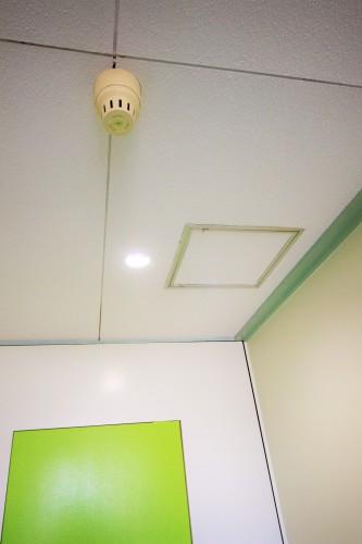 アプローチ 天井 杉 板 DIY スタジオ・カーサ