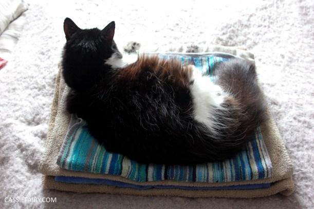 cheeky cat sleeping on laundry-2