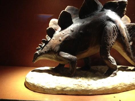 Stegosaurus, 1/12 life size