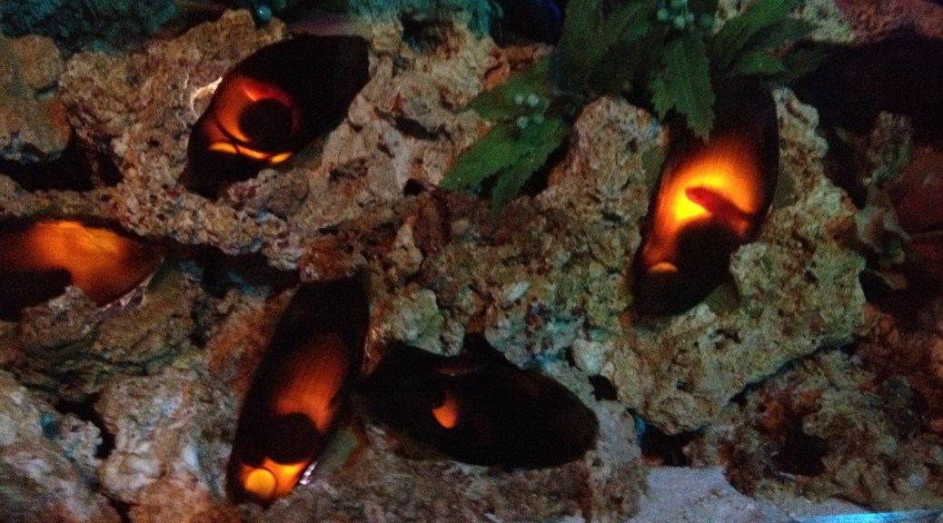 shark eggs illuminated from behind at SeaWorld in Orlando, FL