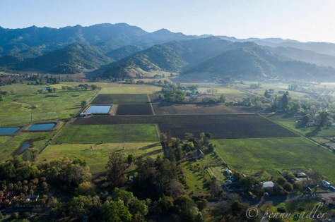 Penny's photo from her Calistoga Balloon trip over the Napa Valley