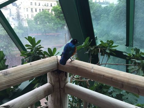 the only photo of a bird at the aviary in Haus des Meeres in Vienna, Austria we managed to get reasonably close