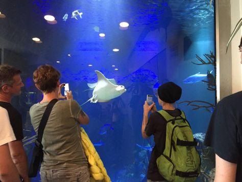 Hammerhead Shark Tank at Haus des Meeres