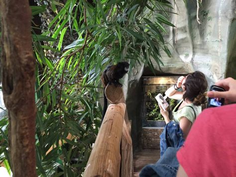 tamarins in the aviary at Haus des Meeres in Vienna, Austria are not afraid of people