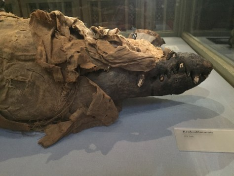 Krokodile Mummy in the Egyptian and Near Eastern Collection at the Kunsthistorisches Museum