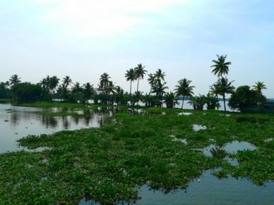 backwatersvegetacao