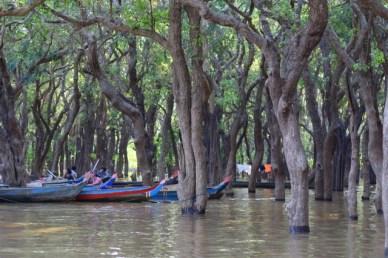 manguezal Siem Reap