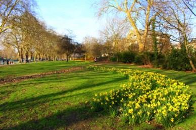 kingston garden