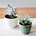 Planters from Leif Shop