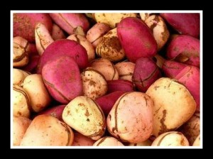 kola nuts, a sign of welcome and belonging