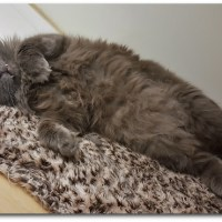Bachelor of the Week: Mr. Grey Fluffy Pants!