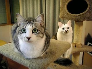 image/catlife-2005-10-25T18:57:48-1.jpg