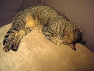 image/catlife-2005-11-02T23:06:13-1.jpg