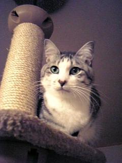 image/catlife-2005-11-11T17:47:19-1.jpg