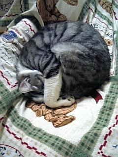 image/catlife-2006-03-06T23:36:06-1.jpg